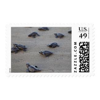 Central America, El Salvador, Pacific Ocean Stamps