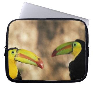Central America, Honduras. Keel-billed Toucan 2 Computer Sleeve