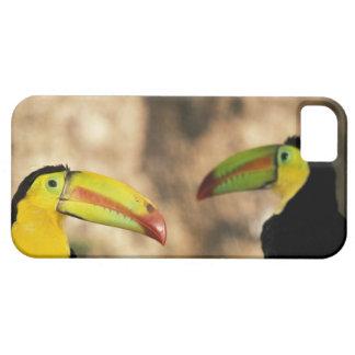 Central America, Honduras. Keel-billed Toucan 2 iPhone SE/5/5s Case