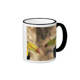 Central America, Honduras. Keel-billed Toucan 2 Ringer Mug