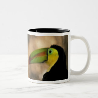 Central America, Honduras. Keel-billed Toucan 2 Two-Tone Coffee Mug