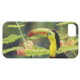 Central America, Honduras. Keel-billed Toucan iPhone 5 Covers
