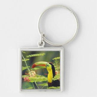 Central America, Honduras. Keel-billed Toucan Keychain