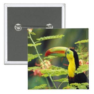 Central America, Honduras. Keel-billed Toucan Pinback Button