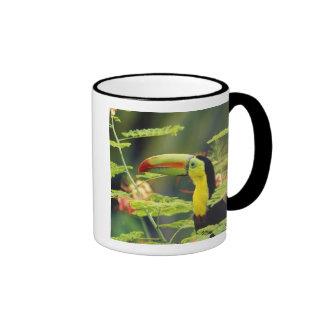 Central America, Honduras. Keel-billed Toucan Ringer Mug