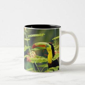 Central America, Honduras. Keel-billed Toucan Two-Tone Coffee Mug