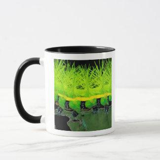 Central America, Panama, Barro Colorado Island. 2 Mug