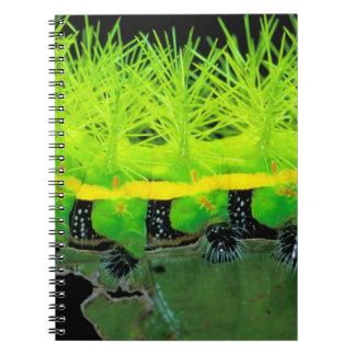 Central America, Panama, Barro Colorado Island. 2 Notebook