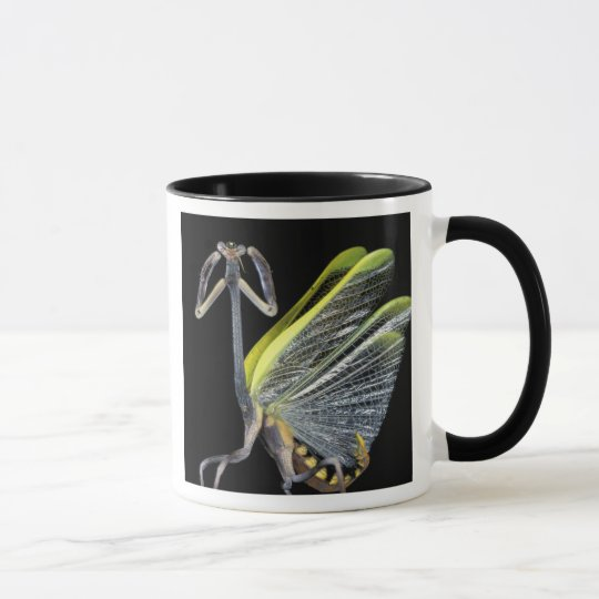 Central America, Panama, Barro Colorado Island. 3 Mug