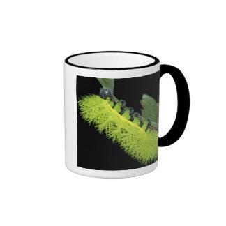 Central America, Panama, Barro Colorado Island. 4 Mug