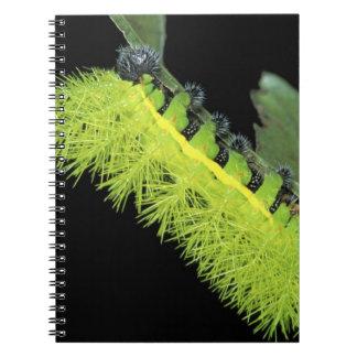 Central America, Panama, Barro Colorado Island. 4 Spiral Note Books