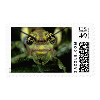 Central America, Panama, Barro Colorado Island. 6 Stamp