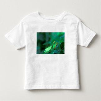 Central America, Panama, Barro Colorado Island. Toddler T-shirt