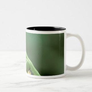 Central America, Panama, Barro Colorado Island, Two-Tone Coffee Mug