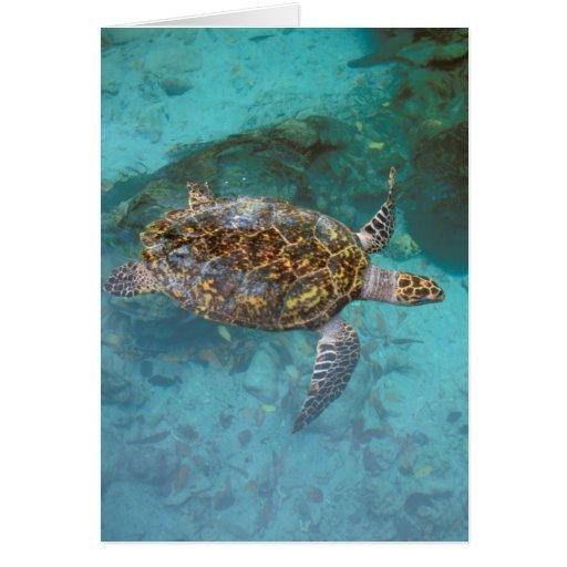 Central America, Panama, Bocas Del Torro Island. Greeting Card