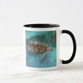 Central America, Panama, Bocas Del Torro Island. Mug