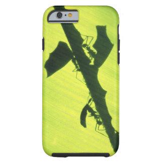 CENTRAL AMERICA Panama Borro Colorado iPhone 6 Case