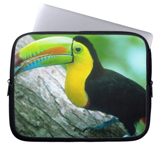 CENTRAL AMERICA, Panama, Borro Colorado Island 2 Laptop Sleeves