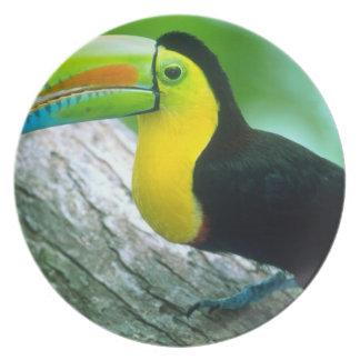 CENTRAL AMERICA, Panama, Borro Colorado Island 2 Melamine Plate