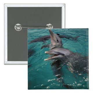 Central America, Panama. Bottle nosed dolphins Pinback Button