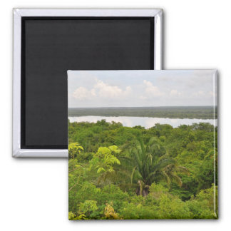 Central America Rain Forest in Belize 2 Inch Square Magnet