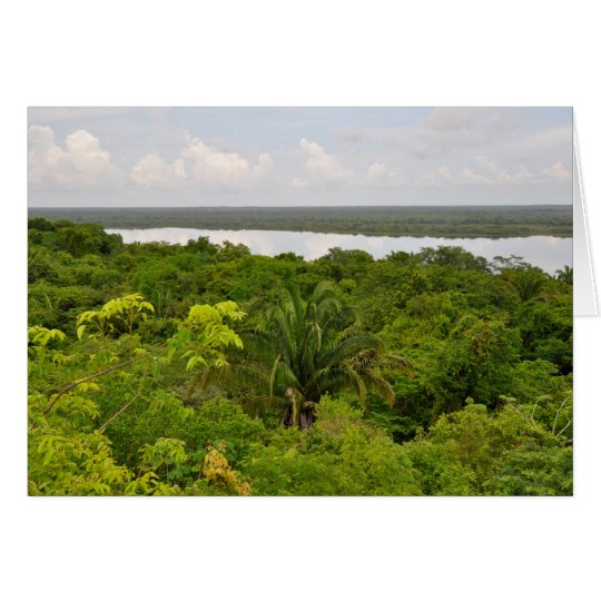 Central America Rain Forest in Belize Card