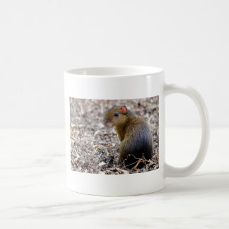Central American Agouti Coffee Mug