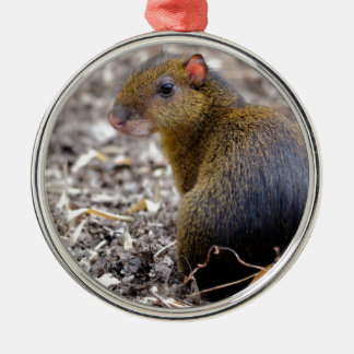 Central American Agouti Round Metal Christmas Ornament