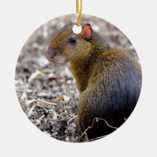 Central American Agouti Double-Sided Ceramic Round Christmas Ornament