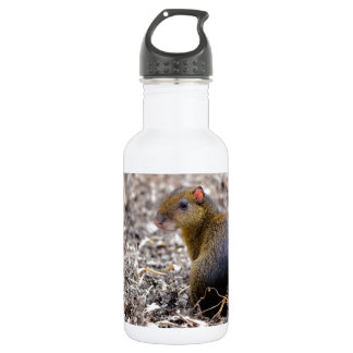 Central American Agouti Stainless Steel Water Bottle