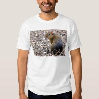 Central American Agouti T-Shirt