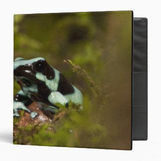 Central PA, USA, Auratus Dart Frog; aka Green 3 Ring Binder
