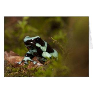 Central PA, USA, Auratus Dart Frog; aka Green Card