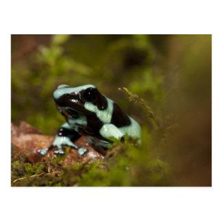 Central PA, USA, Auratus Dart Frog; aka Green Postcard