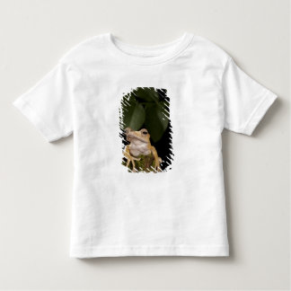 Central PA, USA,. Borneo Eared Frog; T Shirt