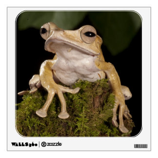 Central PA, USA,. Borneo Eared Frog; Wall Decal