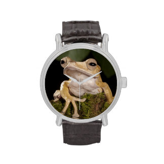 Central PA, USA,. Borneo Eared Frog; Wrist Watches