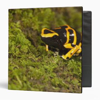 Central PA, USA, Bumble Bee Dart Frog; Binder