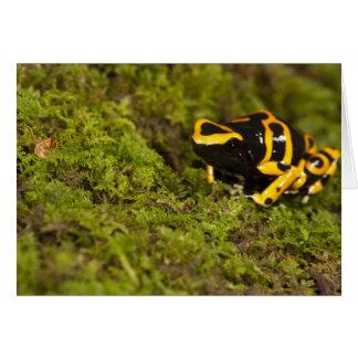 Central PA, USA, Bumble Bee Dart Frog; Card