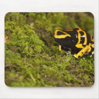 Central PA, USA, Bumble Bee Dart Frog; Mouse Pad