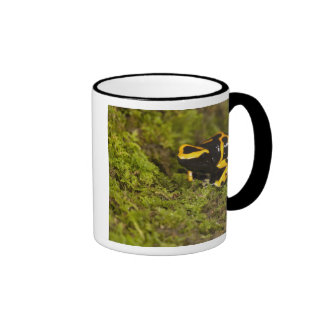 Central PA, USA, Bumble Bee Dart Frog; Mugs