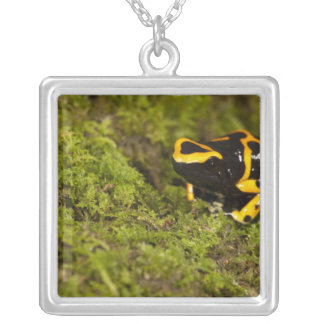 Central PA, USA, Bumble Bee Dart Frog; Silver Plated Necklace