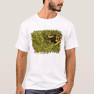 Central PA, USA, Bumble Bee Dart Frog; T-Shirt