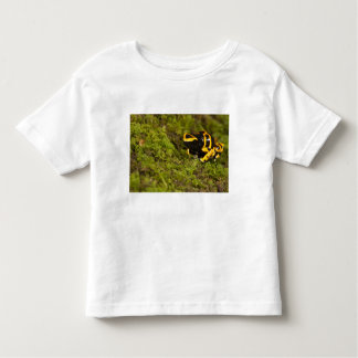 Central PA, USA, Bumble Bee Dart Frog; Toddler T-shirt