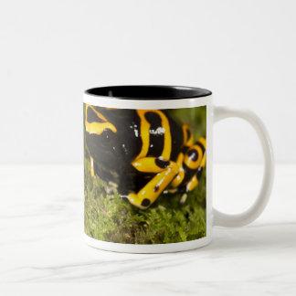Central PA, USA, Bumble Bee Dart Frog; Two-Tone Coffee Mug