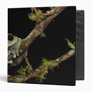 Central PA, USA, Maroon Eye Frog Moon Frog); Binder