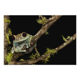 Central PA, USA, Maroon Eye Frog Moon Frog); Photo Print