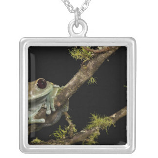 Central PA, USA, Maroon Eye Frog Moon Frog); Silver Plated Necklace