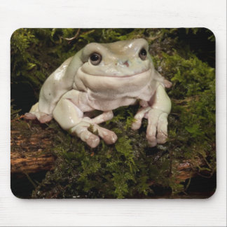 Central PA, USA, White's Treefrog; Litoria Mouse Pad