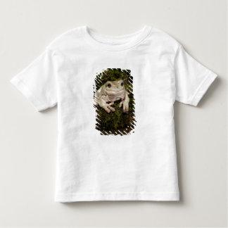 Central PA, USA, White's Treefrog; Litoria Shirt